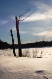 Dead Tree on Lake